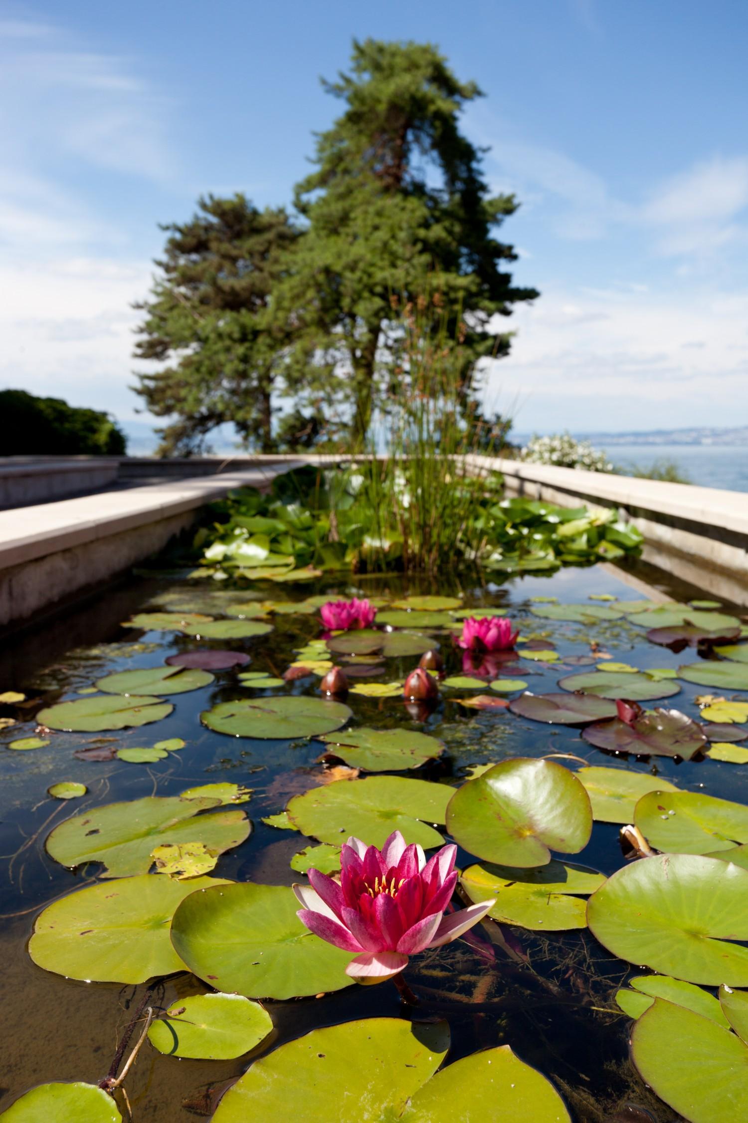 Jardin de l eau du pr curieux ville d 39 evian for Piscine d evian
