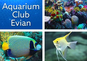 Aquarium club Evian